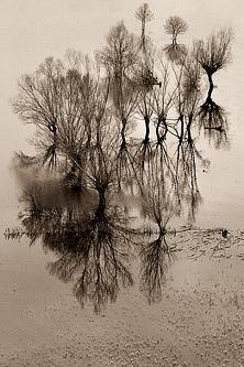 Shepherds of the Trees by Vladimir Popović