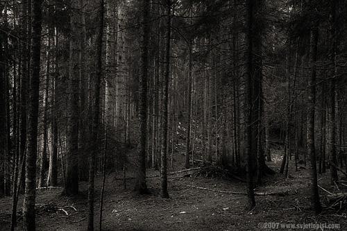 The Šuma by Vladimir Popović