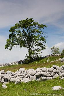 Kučko drvce by Vladimir Popović